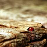 Oğlak Burcu Neden Şanssız? Oğlaklar Hakkında Tüm Detaylar