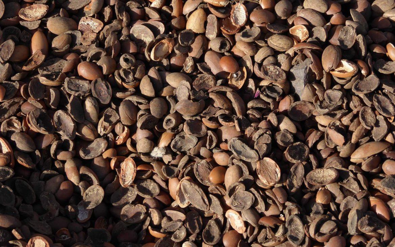 Argan yağı nedir?