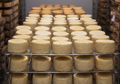 İnek peyniri faydaları